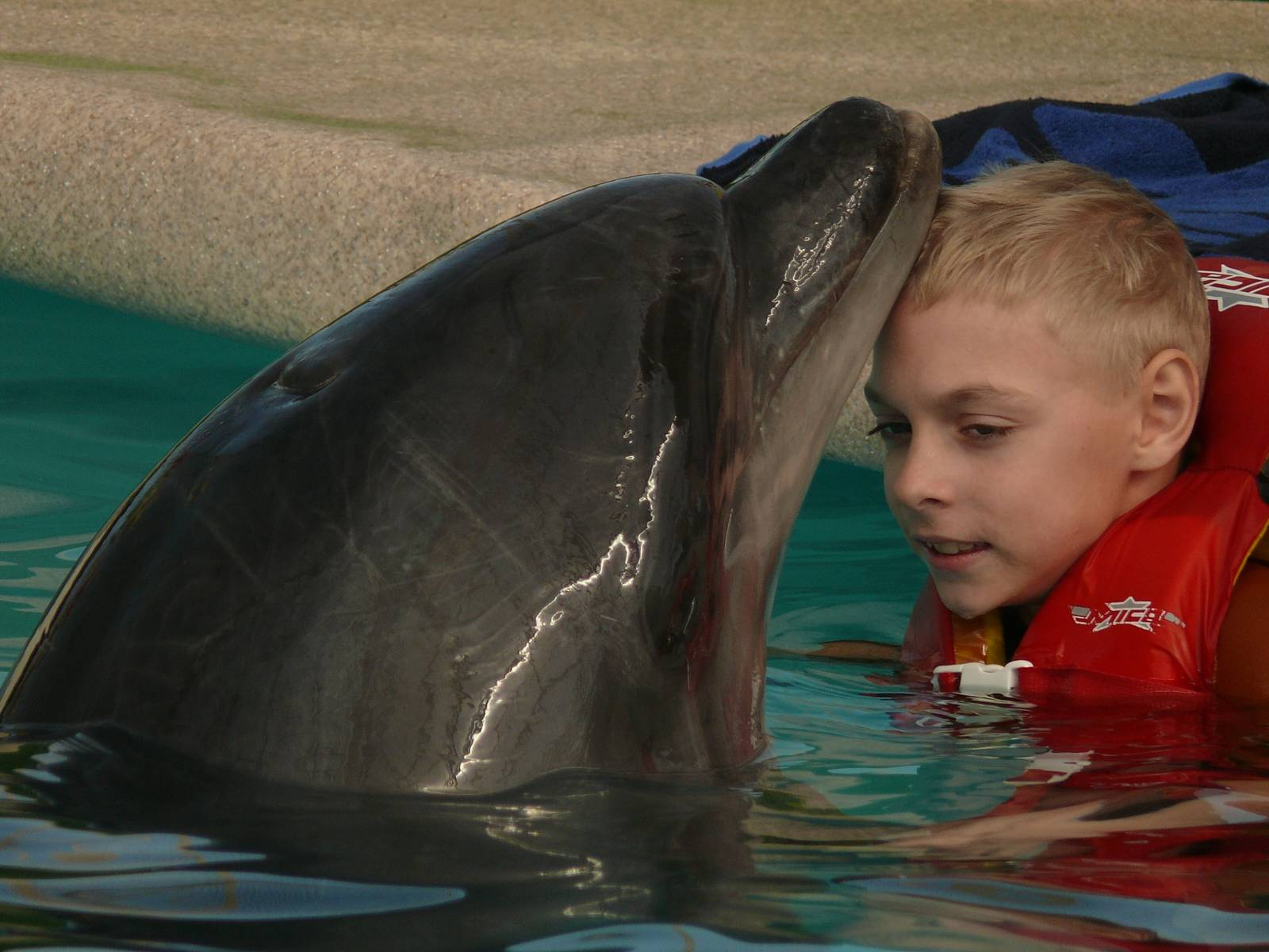 Книга: Дети дельфинов - Тамара Михеева. Купить книгу, читать